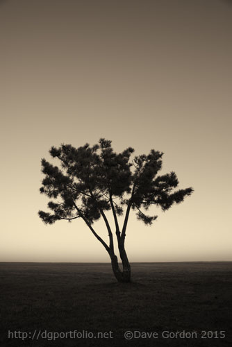 Lone Tree at Twilight Toned image
