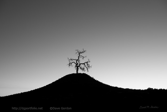 Tree and Hill BW