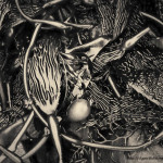 Kelp V Toned fine art nature photograph