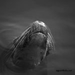 Fine Art black and white wildlife photograph