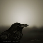 The raven image