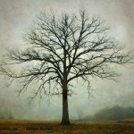Bare Tree and Fog image