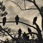 Vultures And Cloudy Sky fine art photograph